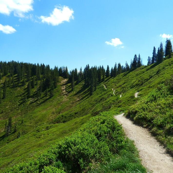 Saalachtaler Hohenweg mit grüner Wiese und Tannenbäumen