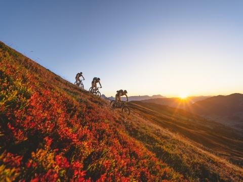 3 Mountainbiker fahren bei Dämmerung über Wiese mit roten Blumen