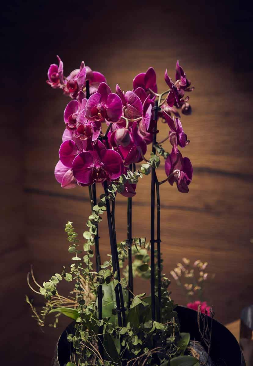 Eine pinke Orchidee mit grünen Blättern